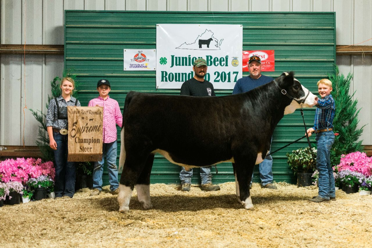 2017 Junior Beef Roundup Supreme Champion Steer shown by Houston KIbler of Shenandoah County