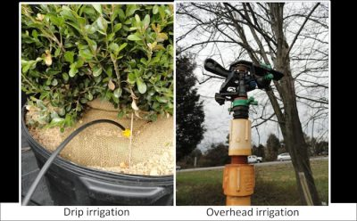 Use drip irrigation to reduce leaf wetness period whenever possible.; Photo Credit: N. Dart