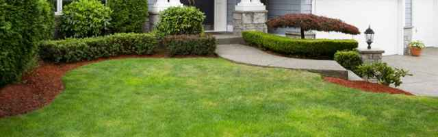 Turf and Garden Tips
